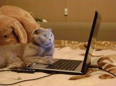 cat_downloading
