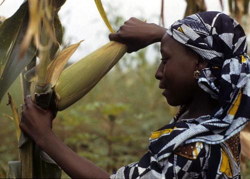 Women-Food-Farming-Image-IITA-Image-Library